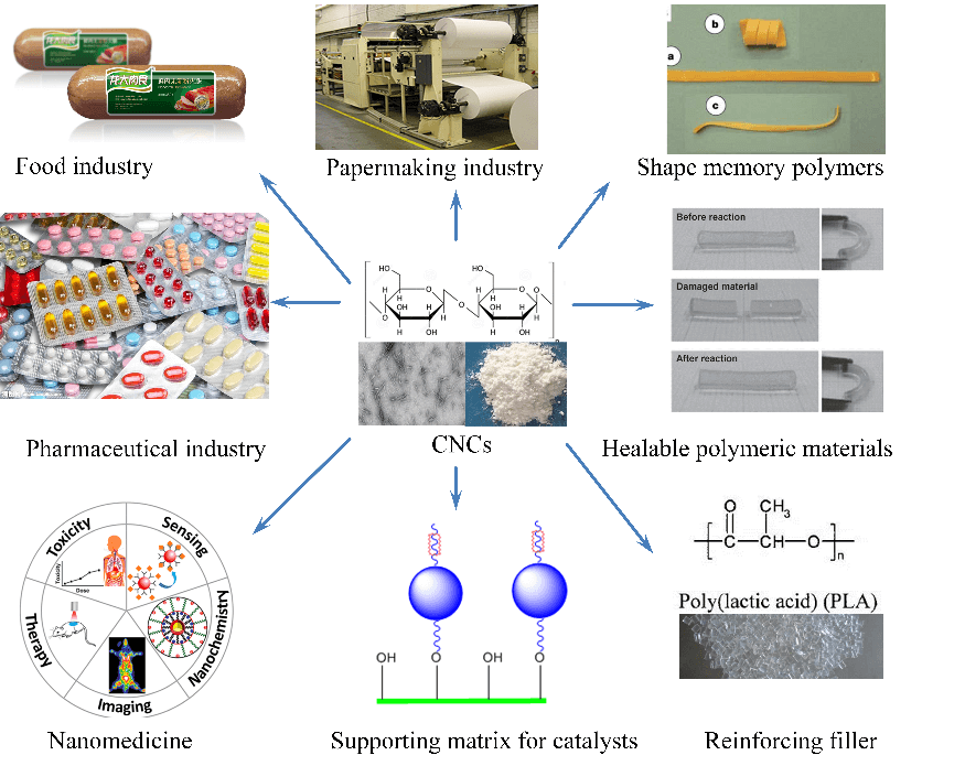 Applications of Cellulose Nanocrystals: A Review