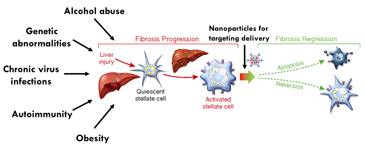 Nanoparticles Targeting Hepatic Stellate Cells for the Treatment of Liver Fibrosis