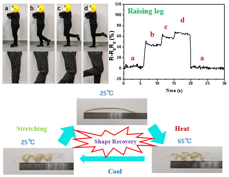Tunable Thermal-Response Shape Memory Bio-Polymer Hydrogels as Body Motion Sensors