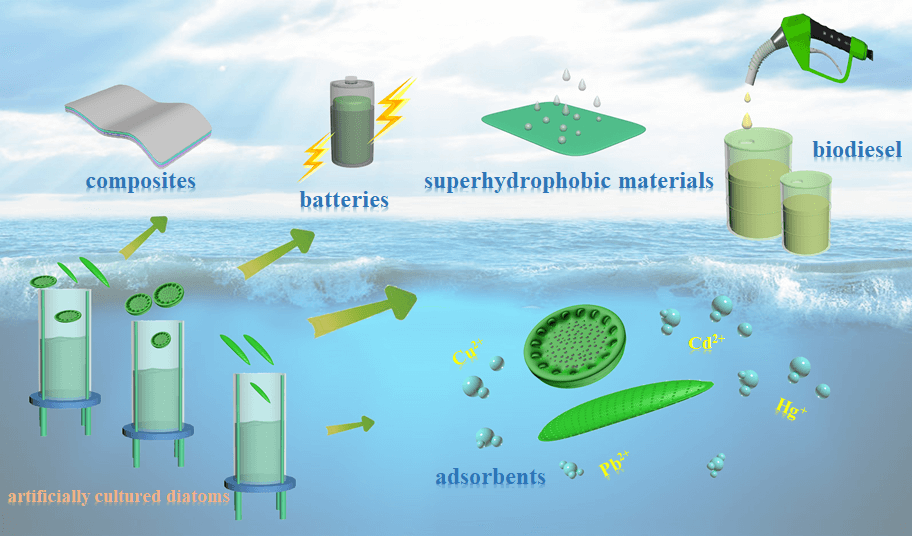 Prospects for the Application of Artificially Cultured Diatom Materials in Energy and Environment