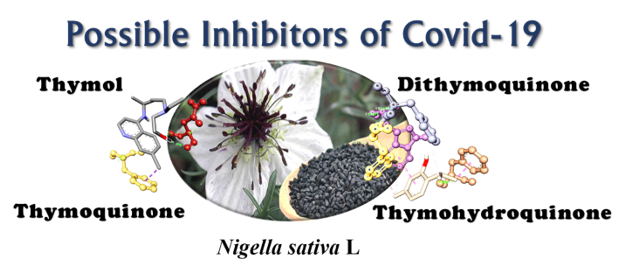 The Revelation of Various Compounds Found in Nigella sativa L. (Black Cumin) and Their Possibility to Inhibit COVID-19 Infection Based on the Molecular Docking and Physical Properties