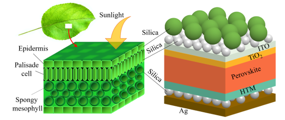 Design of Biomimetic Leaf-type Hierarchical Nanostructure for Enhancing the Solar Energy Harvesting of Ultra-thin Perovskite Solar Cells