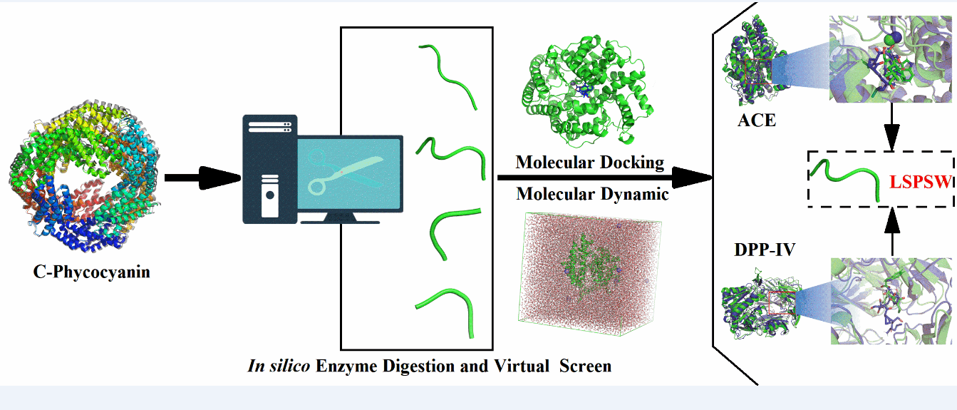 Identification of C-phycocyanin-derived Peptides as Angiotensin Converting Enzyme and Dipeptidyl Peptidase IV Inhibitors via Molecular Docking and Molecular Dynamic Simulation
