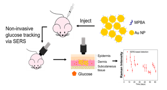 A Subcutaneously Injected SERS Nanosensor Enabled Long-term in Vivo Glucose Tracking