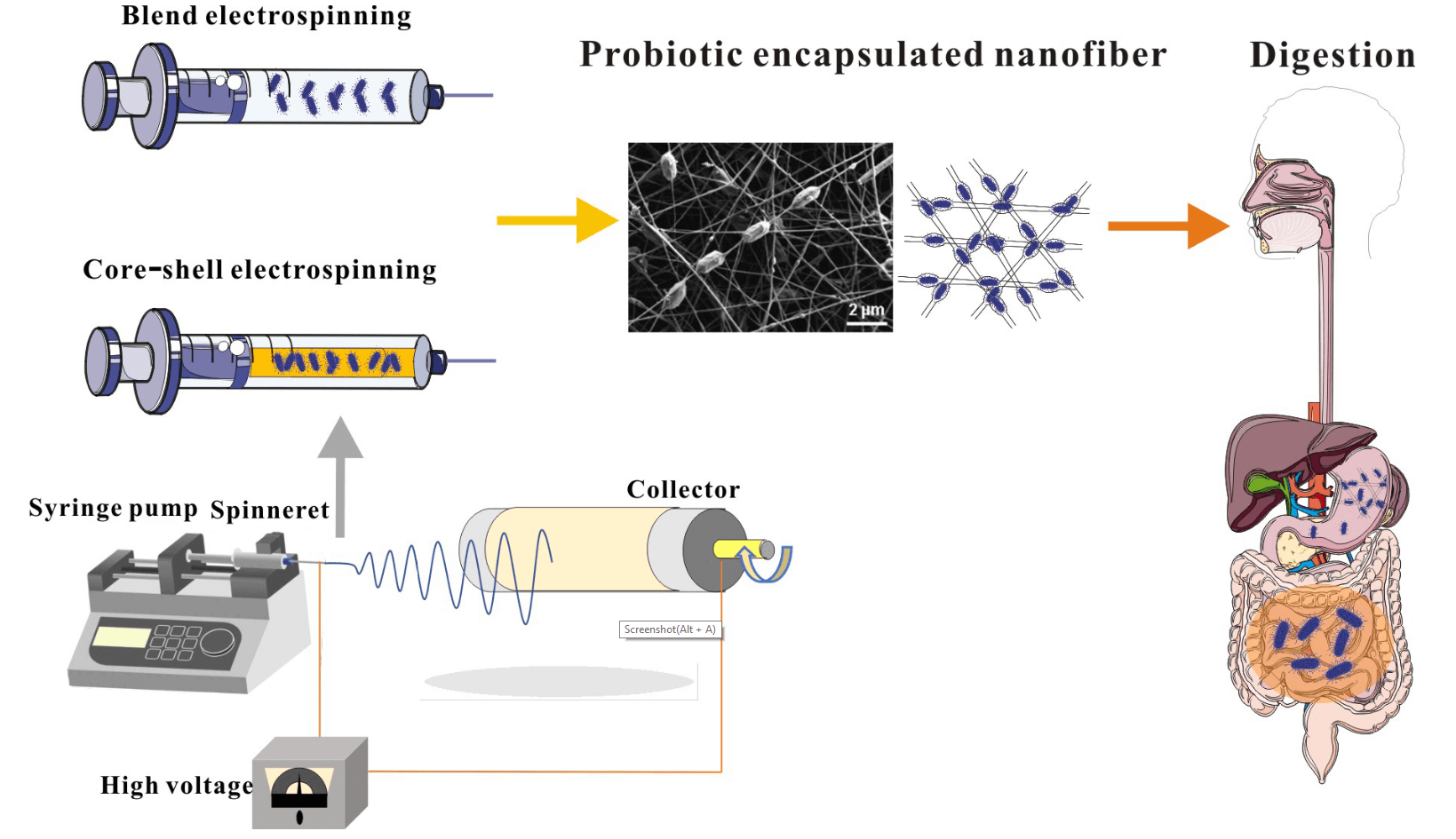 Recent Advances in Probiotics Encapsulation by Electrospinning
