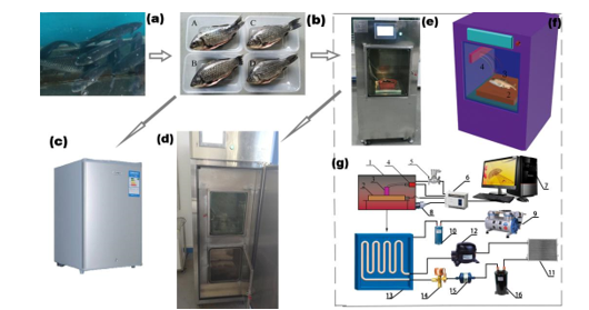 The Cold Storage Quality of Carassius Auratus in Hypobaric Storage Situation