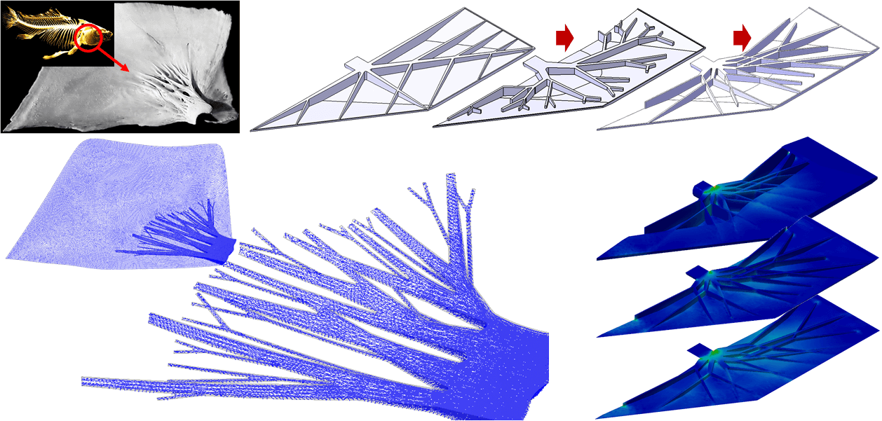Bio-Inspired Feature-Driven Topology Optimization for Rudder Structure Design