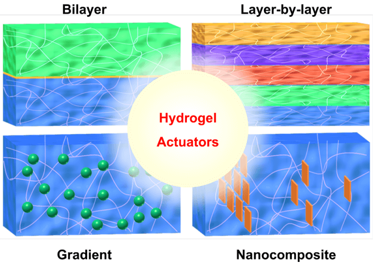 Thermo-Responsive and Shape-Adaptive Hydrogel Actuators from Fundamentals to Applications