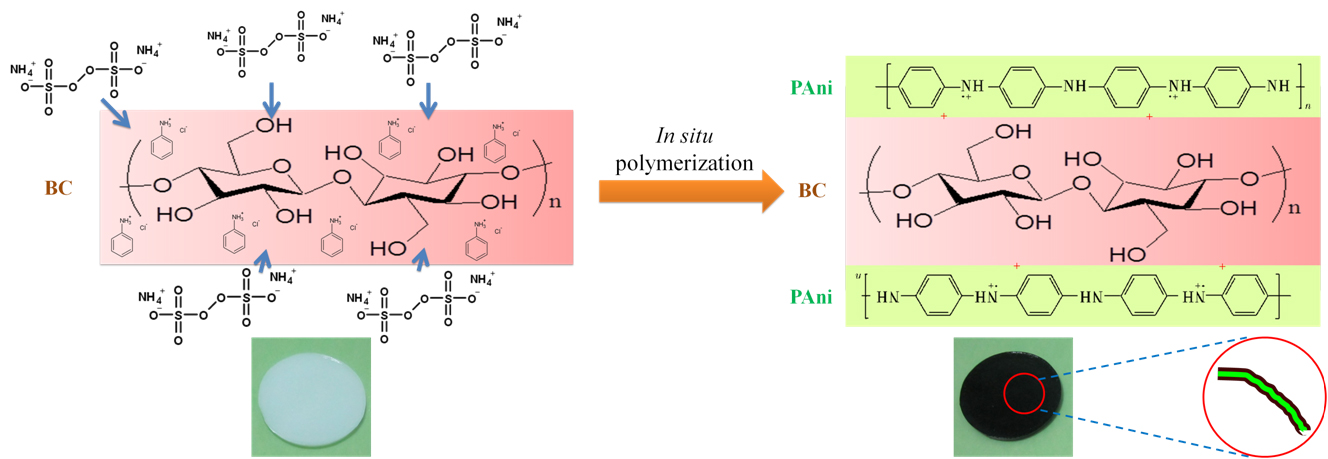 Fabrication of pH-electroactive Bacterial Cellulose/Polyaniline Hydrogel for the Development of a Controlled Drug Release System