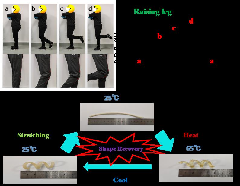 Tunable Thermal-Response Shape Memory Bio-Polymer Hydrogels as Body Motion Sensors