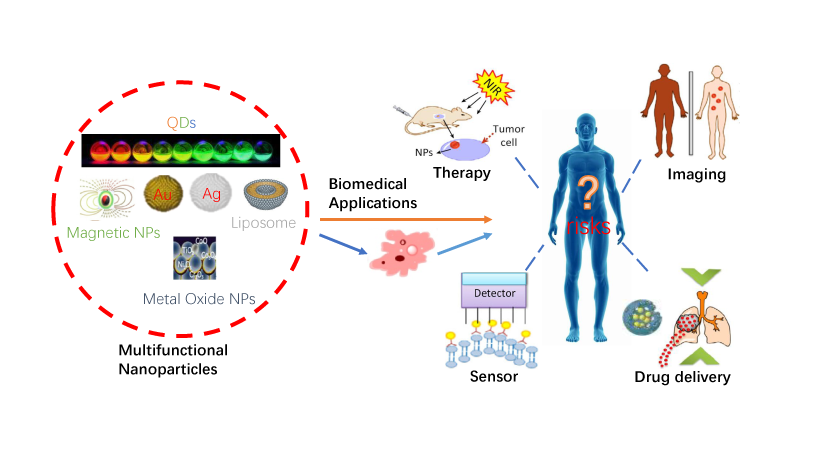 Nanoparticles in Biomedicine-Focus on Imaging Applications