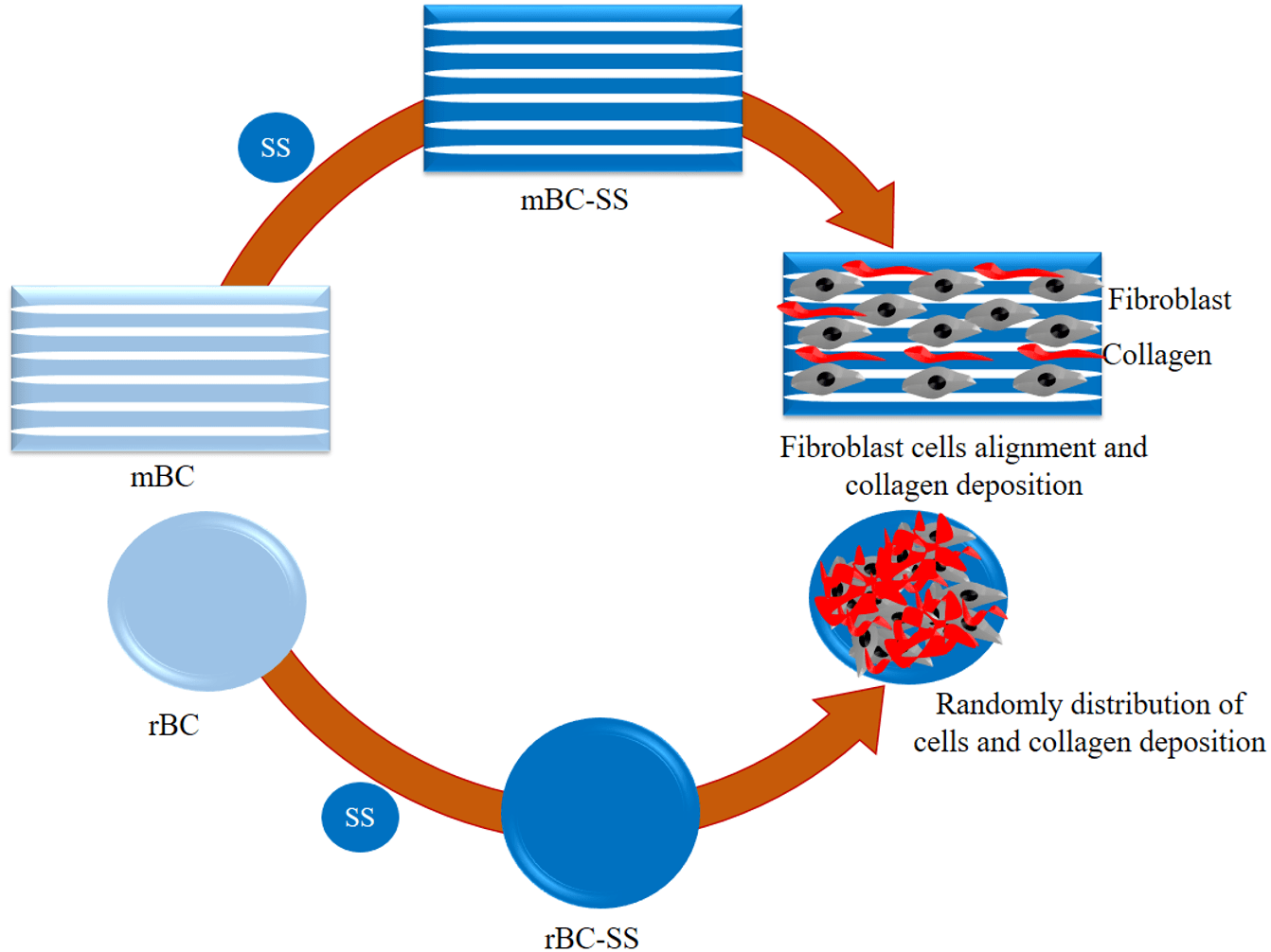 Combining Silk Sericin and Surface Micropatterns in Bacterial Cellulose Dressings to Control Fibrosis and Enhance Wound Healing