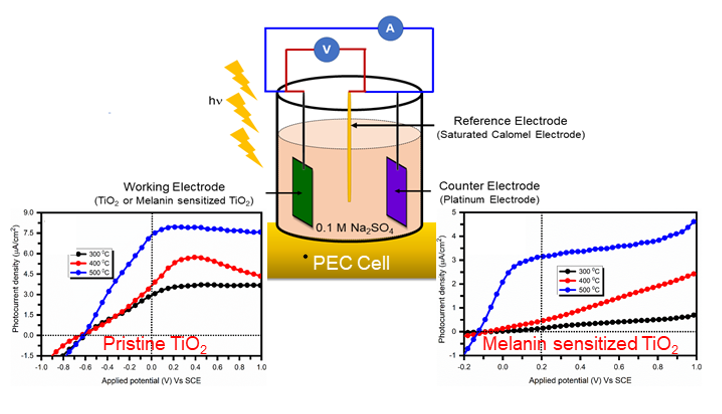 Study of Structural, Optical, Morphology and Photoelectrochemical Properties of Melanin Sensitized TiO2 Thin Films Prepared by Chemical Bath Deposition Method