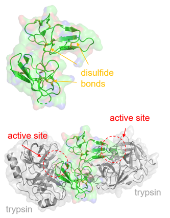 Bowman-Birk Inhibitors from Plants for Inhibiting Eukaryotic Cells