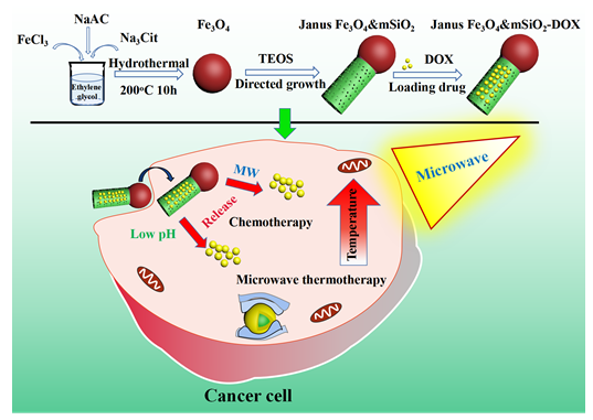 Synthesis of Janus Fe3O4&mSiO2 Nanocarriers for Chemo-Microwave Therapy of Cancer Cells
