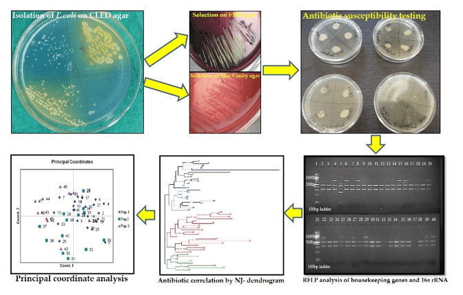 Molecular Typing of Multidrug Resistant Uropathogenic Escherichia coli by Restriction Fragment Length Polymorphism