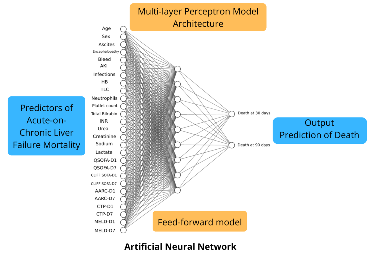 Acute-on-Chronic Liver Failure Mortality Prediction using an Artificial Neural Network