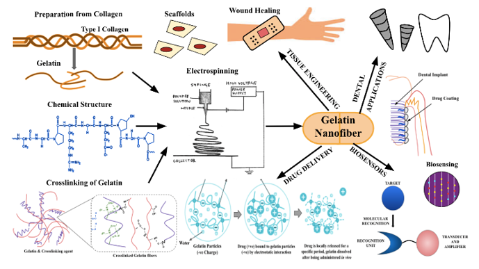 Gelatin Nanofibers in Drug Delivery Systems and Tissue Engineering